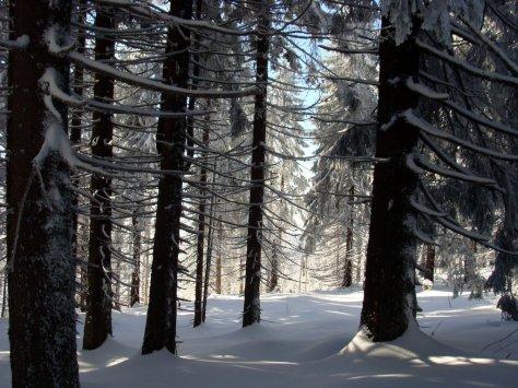 6._zima_na_Turbaczu