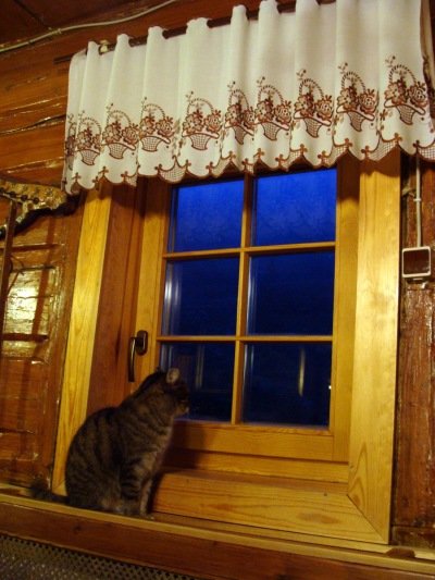 Samotnia_kot_przy_oknie