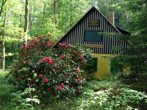 Saska_Szwajcaria_rododendrony_i_chatka